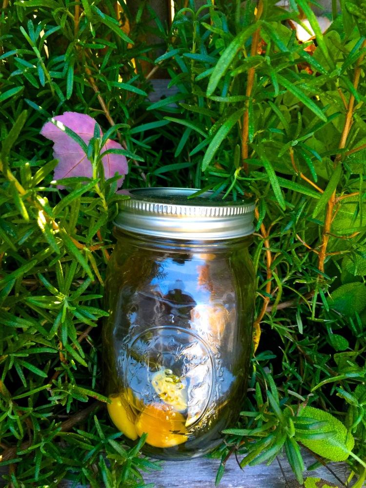 Rosemary and Garlic oil